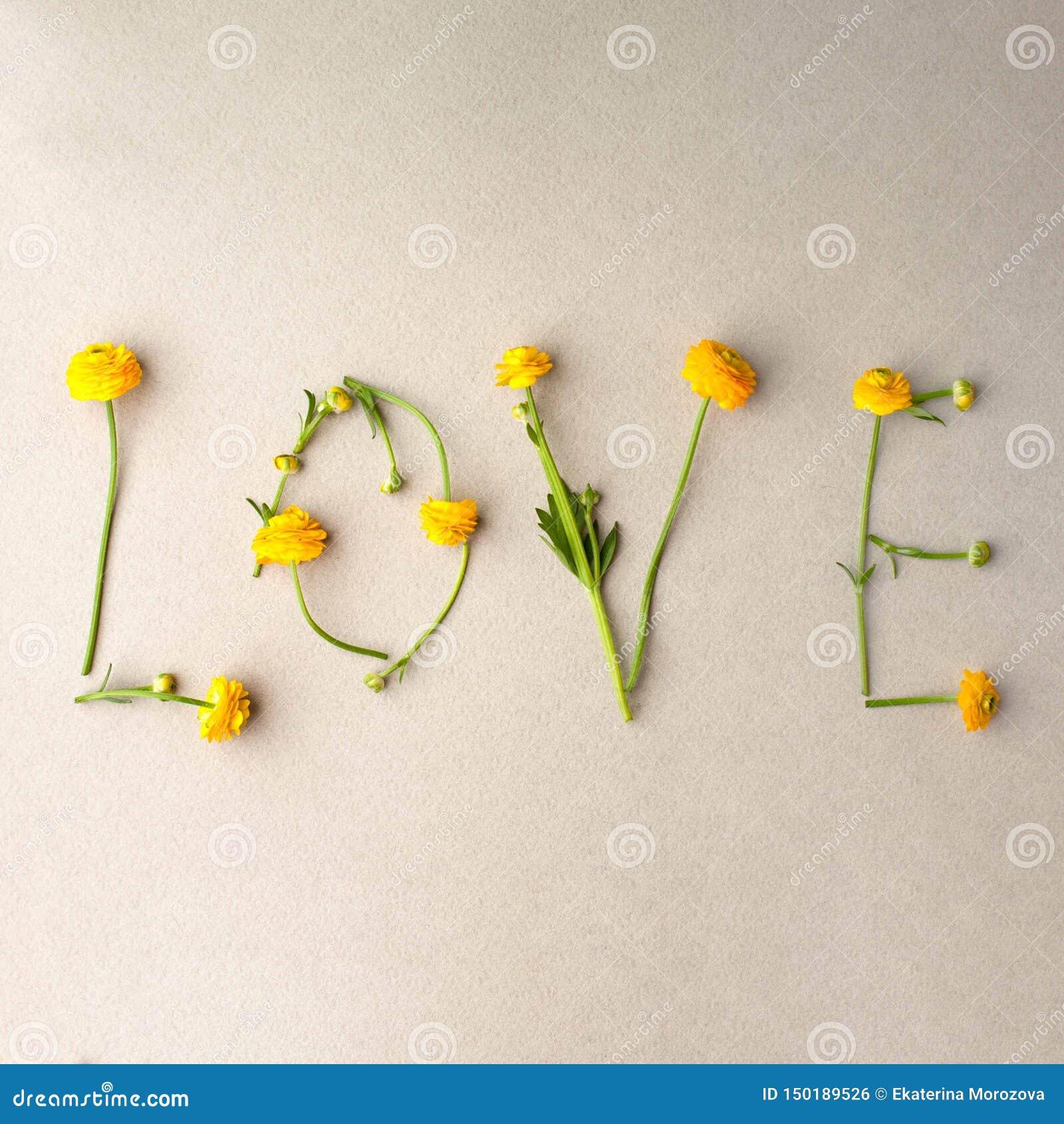 El amor de la palabra hizo de ramas amarillas de las flores en fondo gris El día de tarjeta del día de San Valentín, día de las m