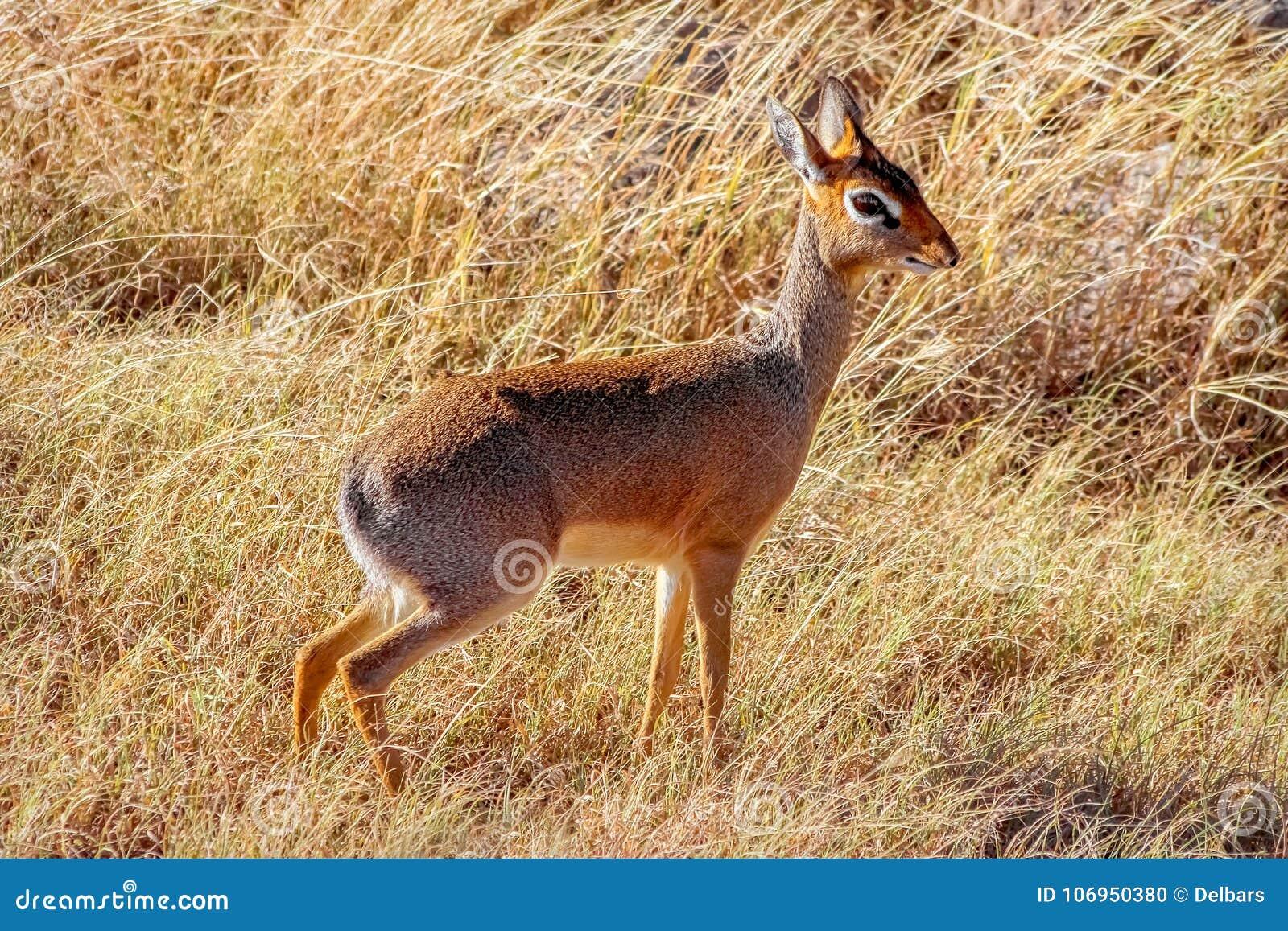 De antilopes africanos fotos Antílopes Banco
