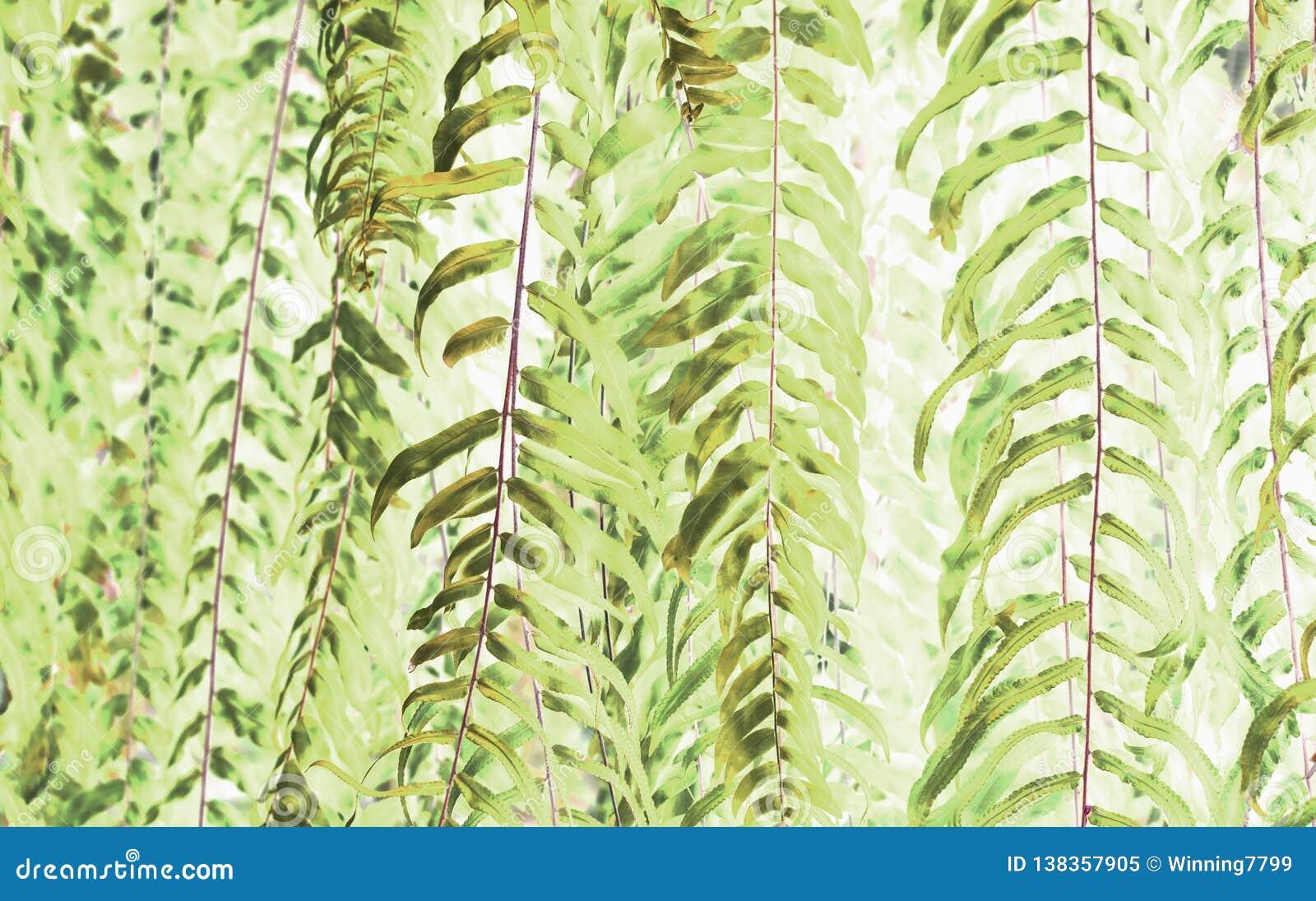 El arte del helecho verde hermoso deja el uso para la imagen abstracta