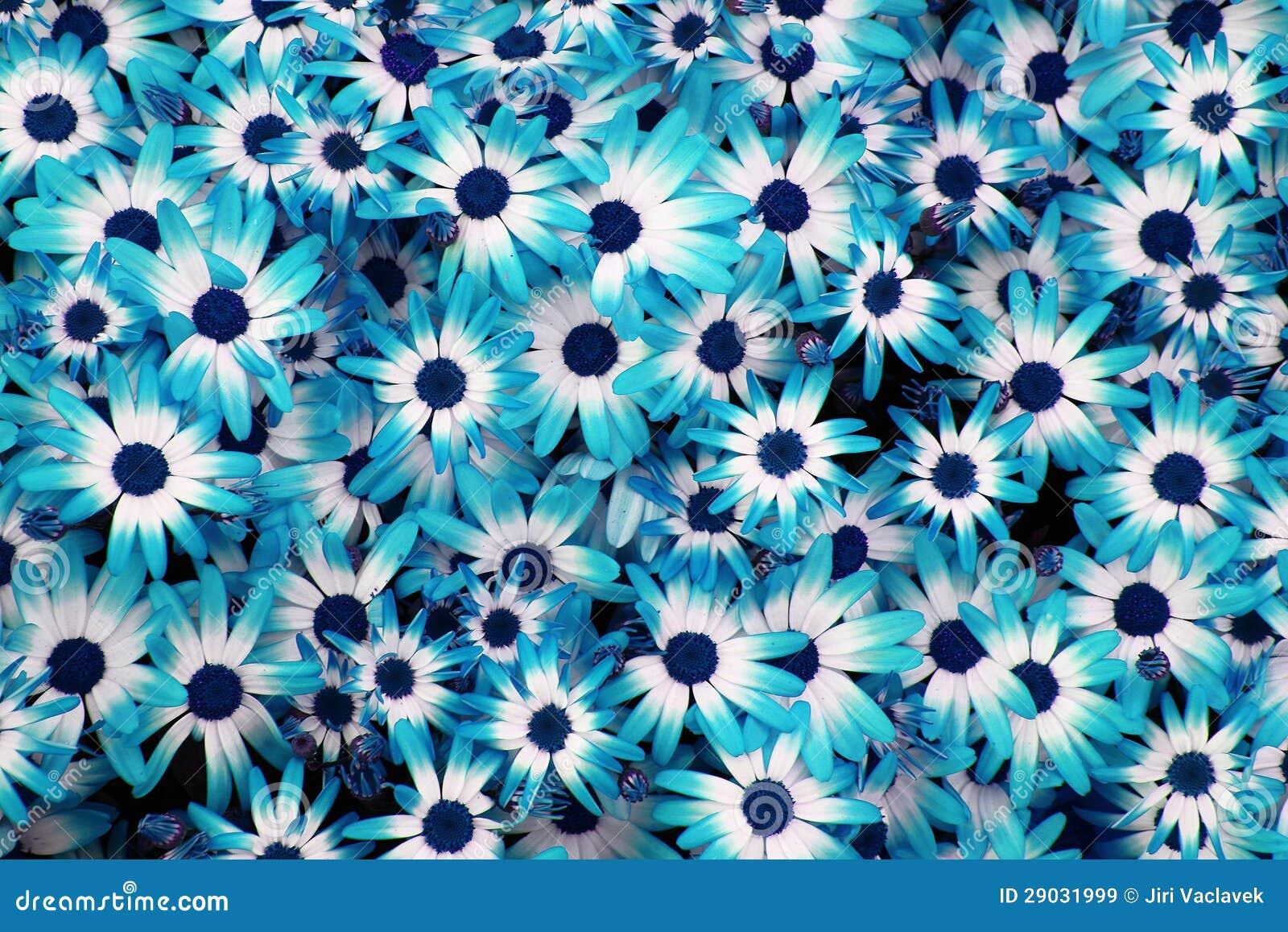 El Azul Florece El Fondo Imagen De Archivo Imagen De Terraplen