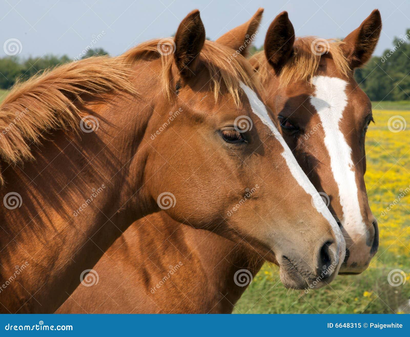 Pferdeküsse