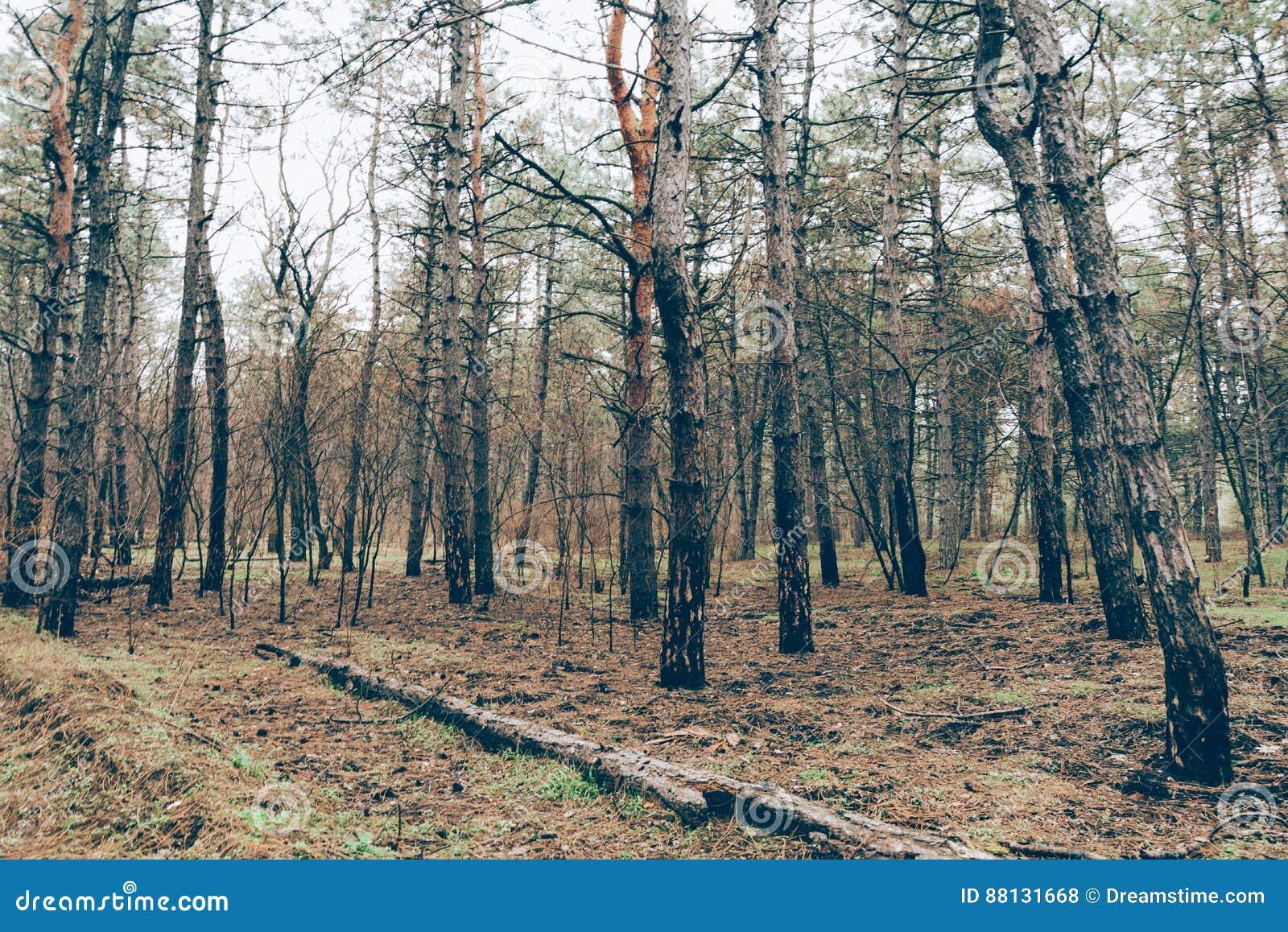 El bosque chamuscado