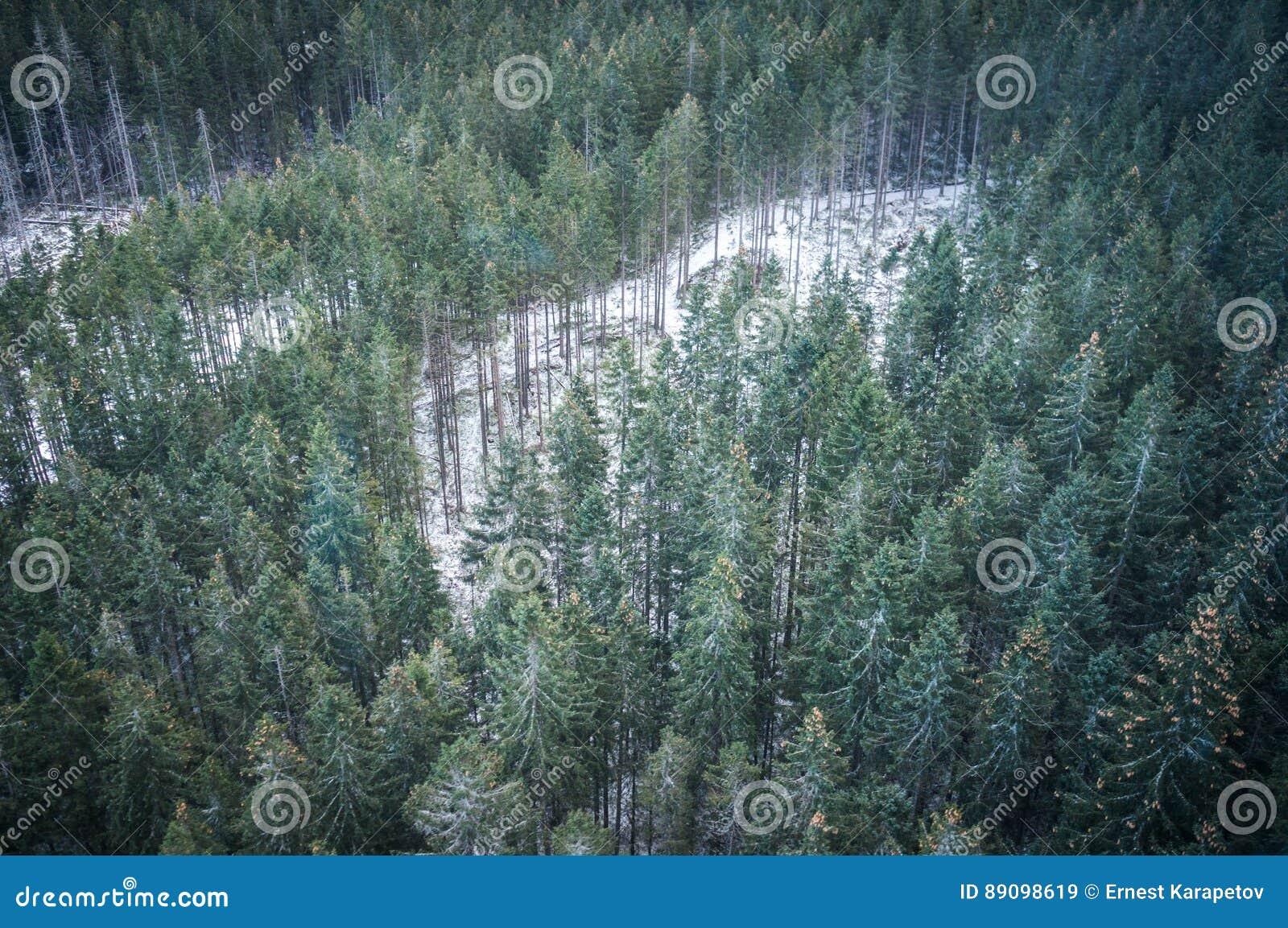 El bosque del invierno en paisaje de las montañas