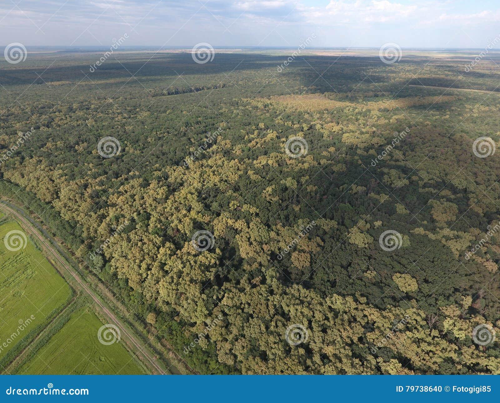 El bosque rojo del bosque cerca del arroz coloca Paisaje con una opinión de ojo de pájaro