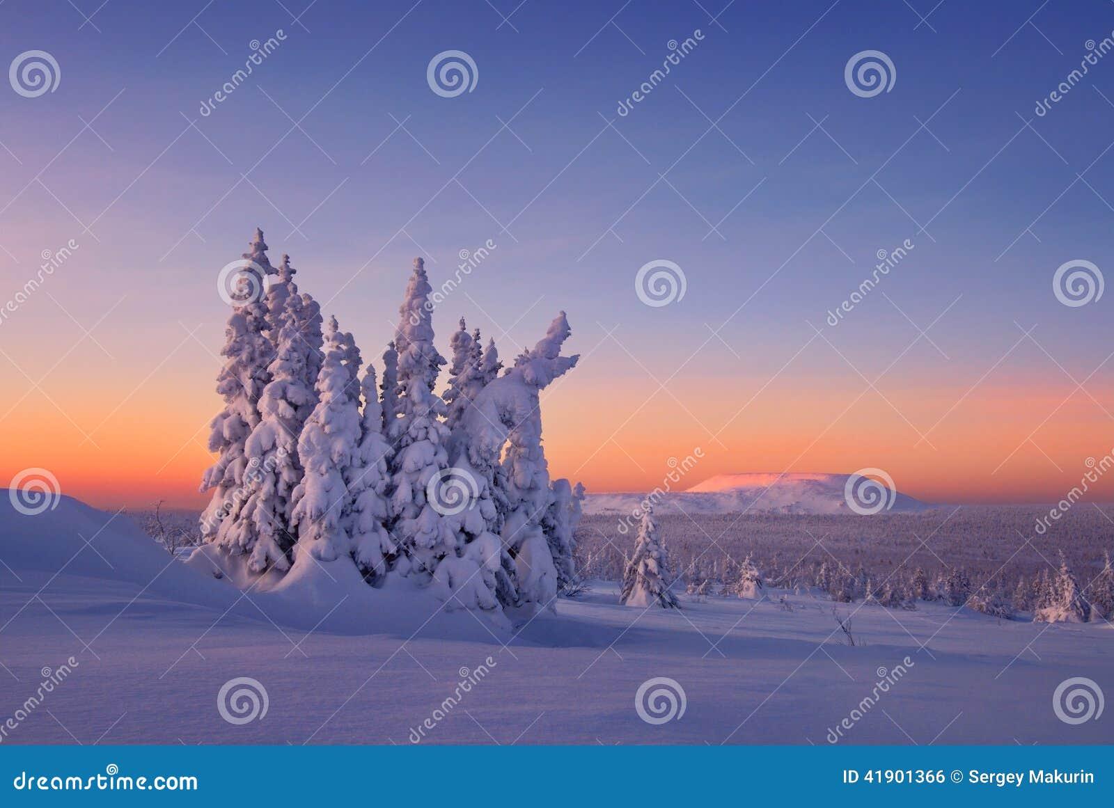 El bosque sitiado por la nieve está en las montañas de Ural del norte