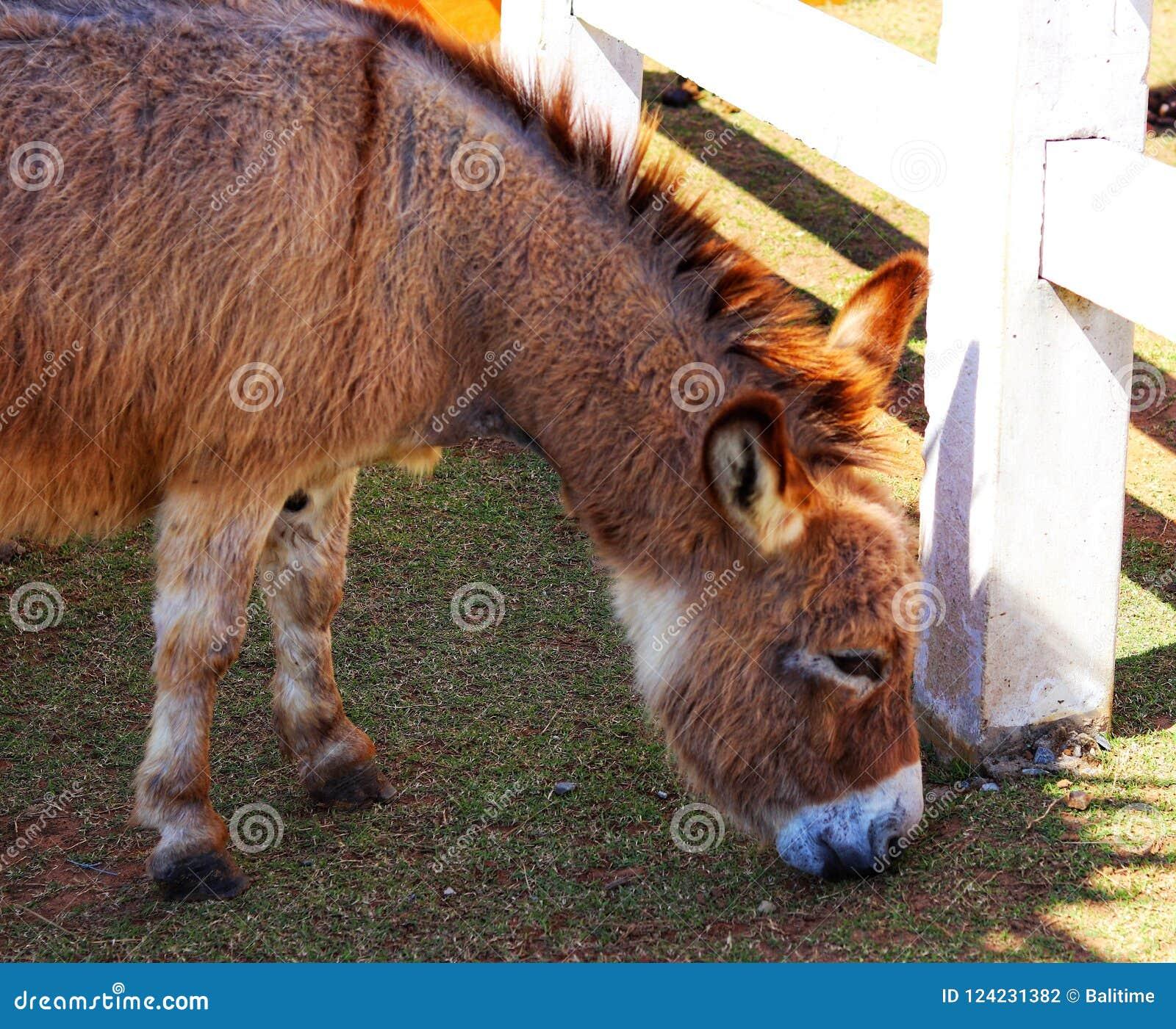 El caballo enano es lindo en el parque zoológico