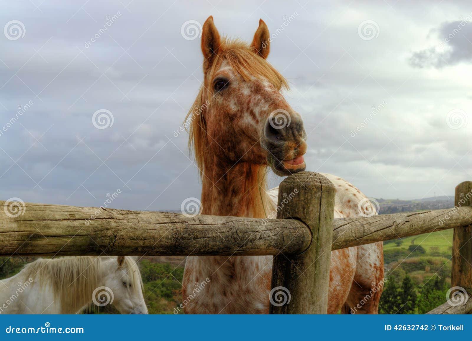 El caballo melado/rojo o anaranjado de la fresa hermosa tira de una cara divertida