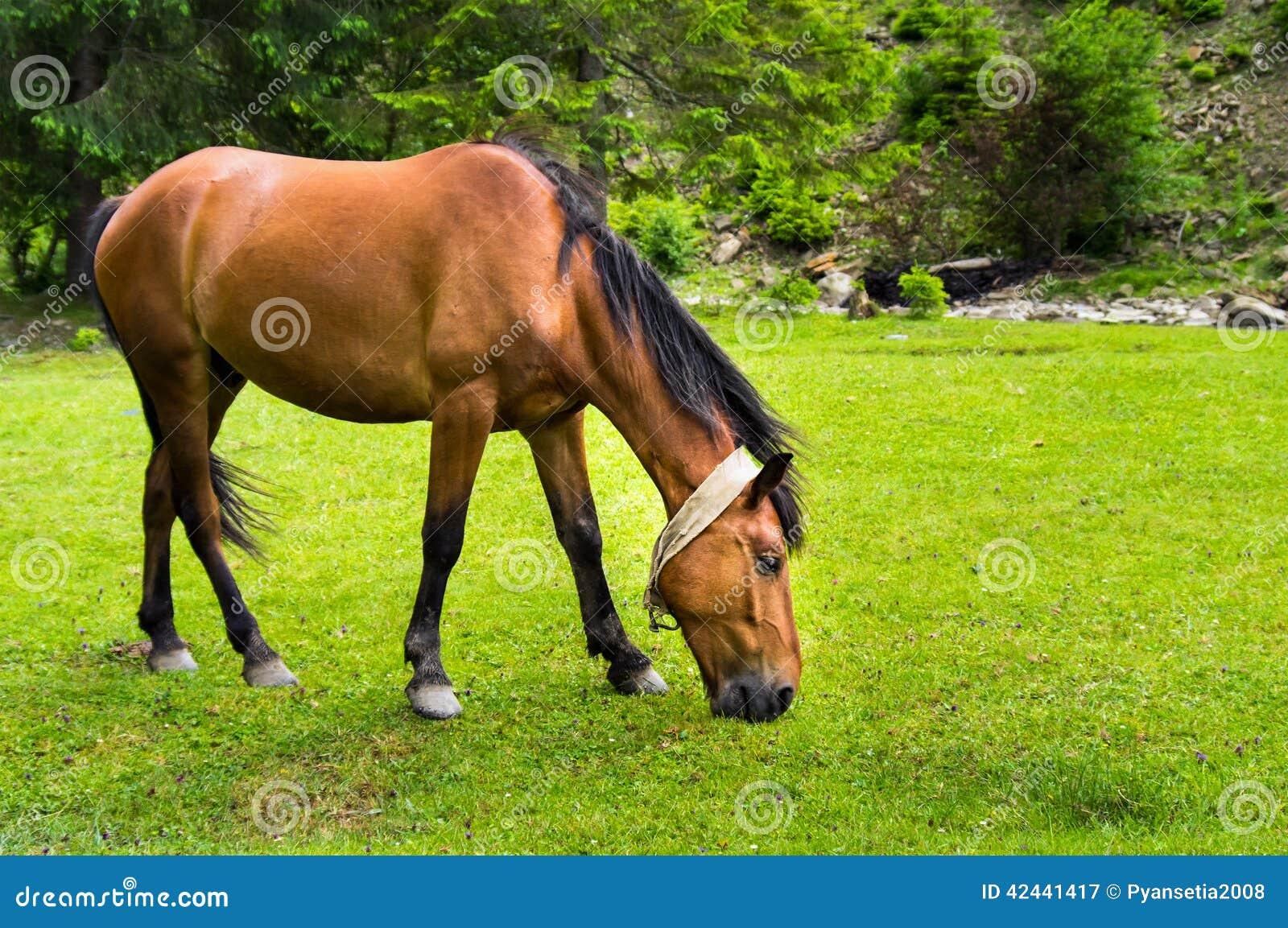 El caballo pasta