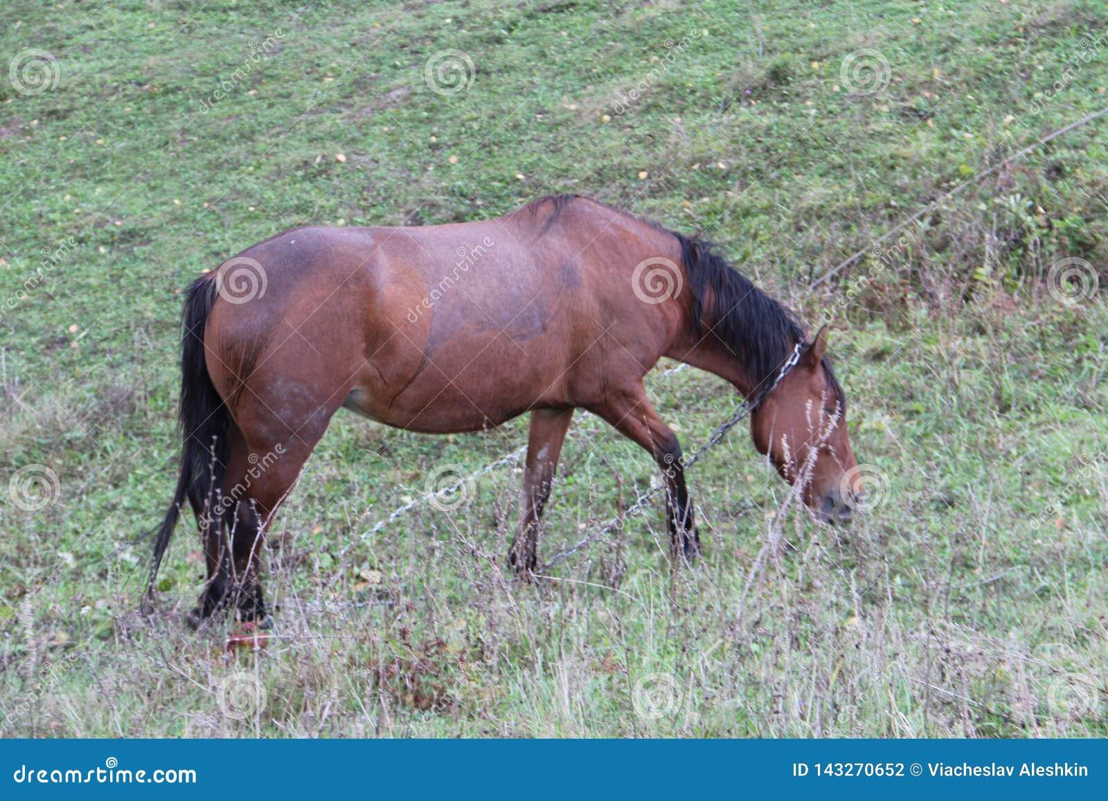 El caballo pasta en un prado verde