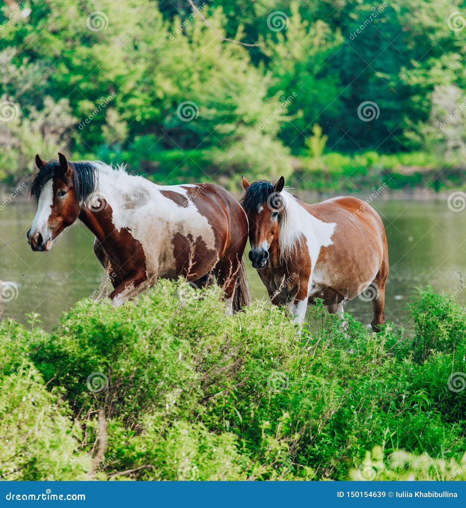 El caballo vino al r?o beber el agua