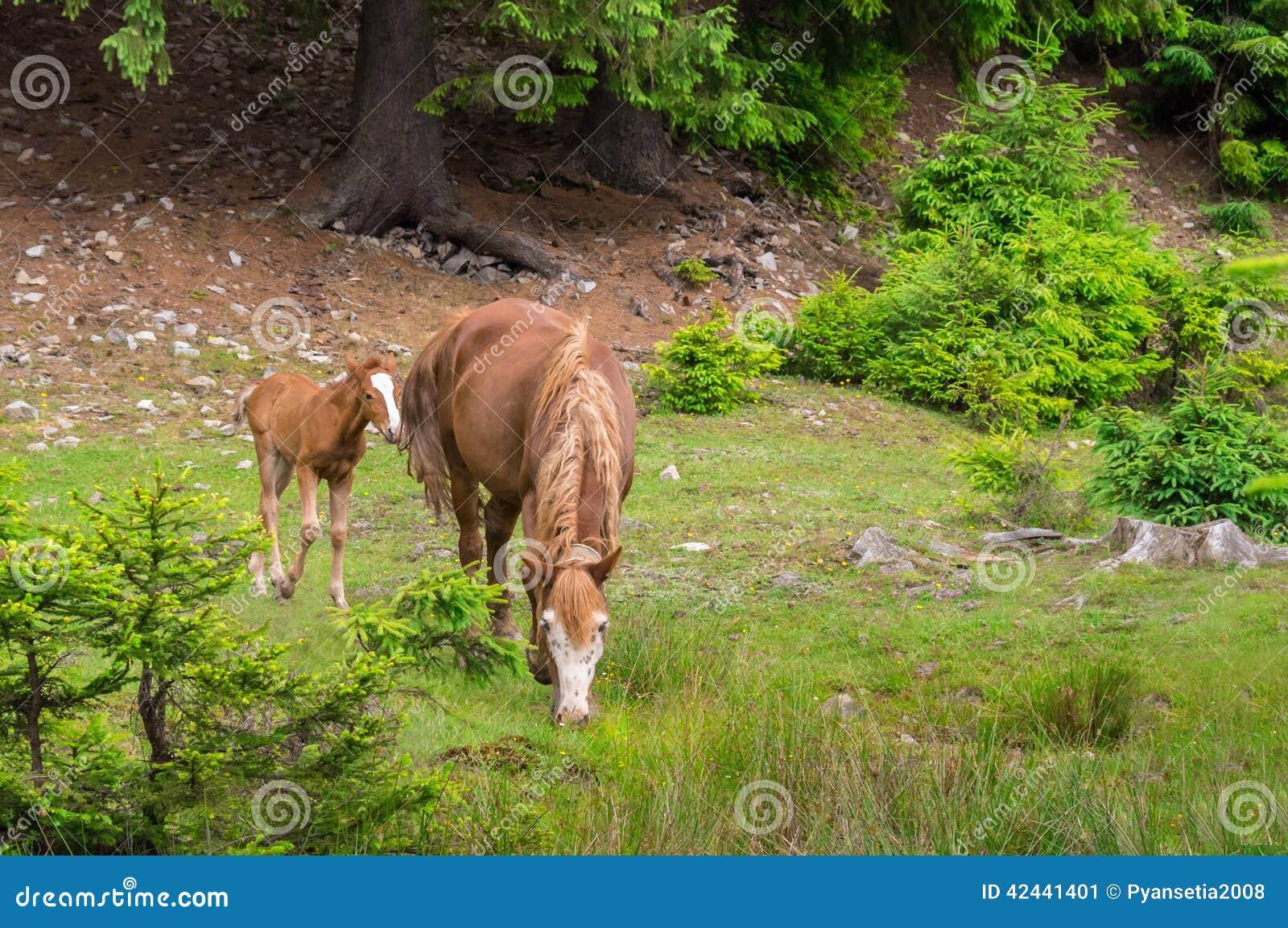 El caballo y el potro pasta
