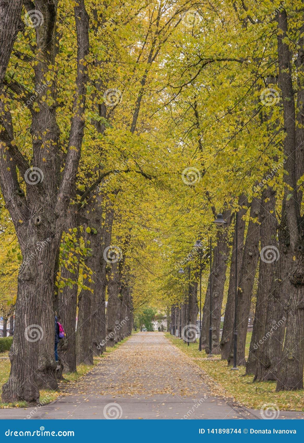El callejón en el parque se alinea con los árboles