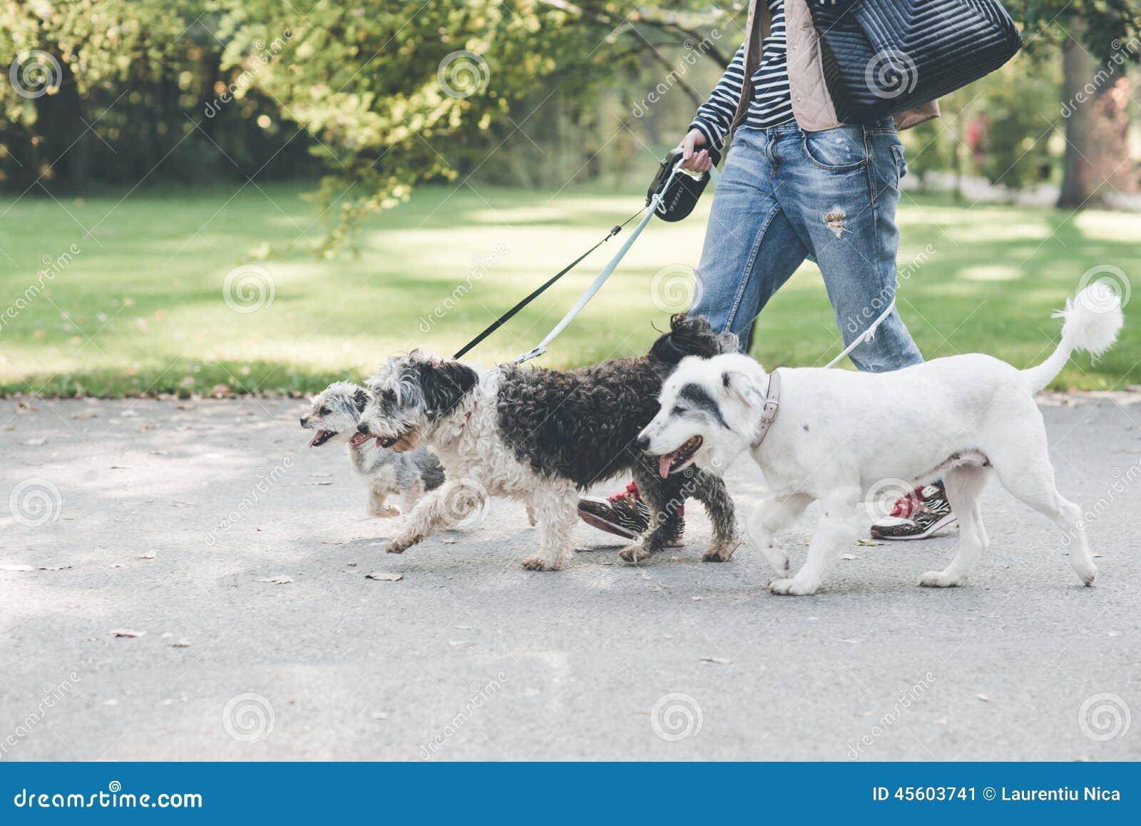 El caminar con los perros en parque