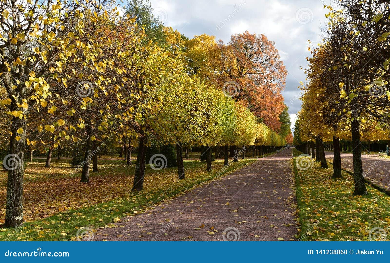 El camino con los árboles amarillos y rojos