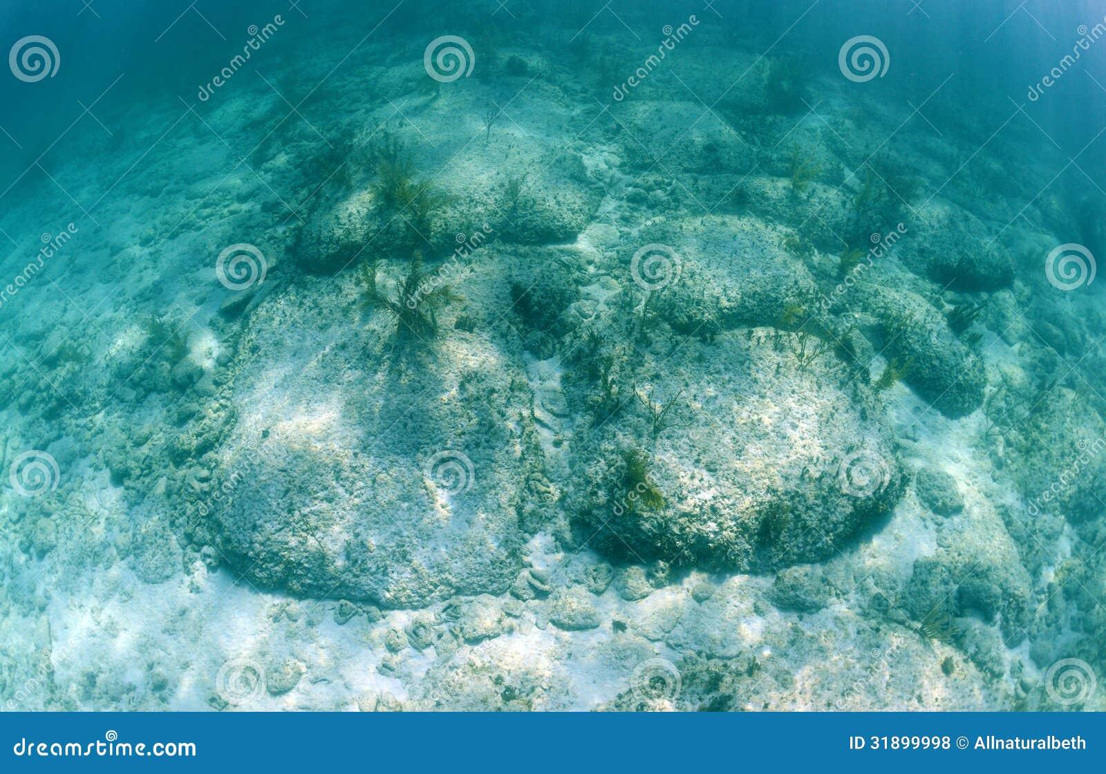 El camino de Bimini es una formación de roca subacuática