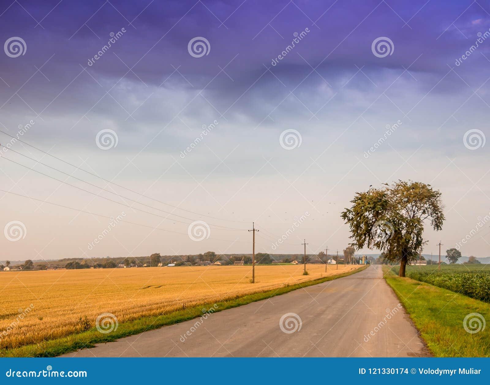 El camino está en el medio del campo Paisaje del verano con cl