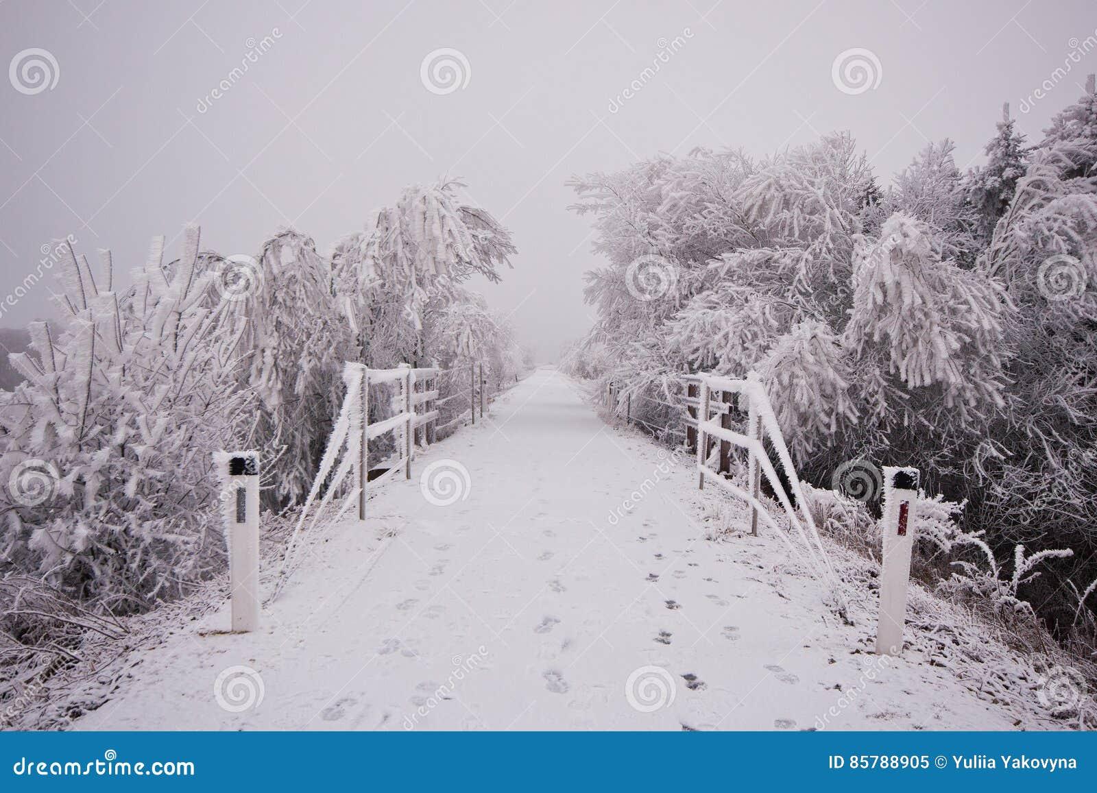 El camino forestal debajo de la nieve en el invierno