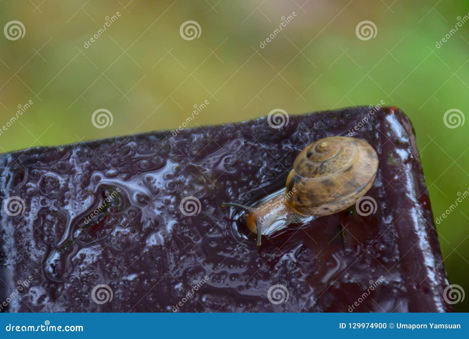 El caracol caminaba en la placa de acero en el jardín