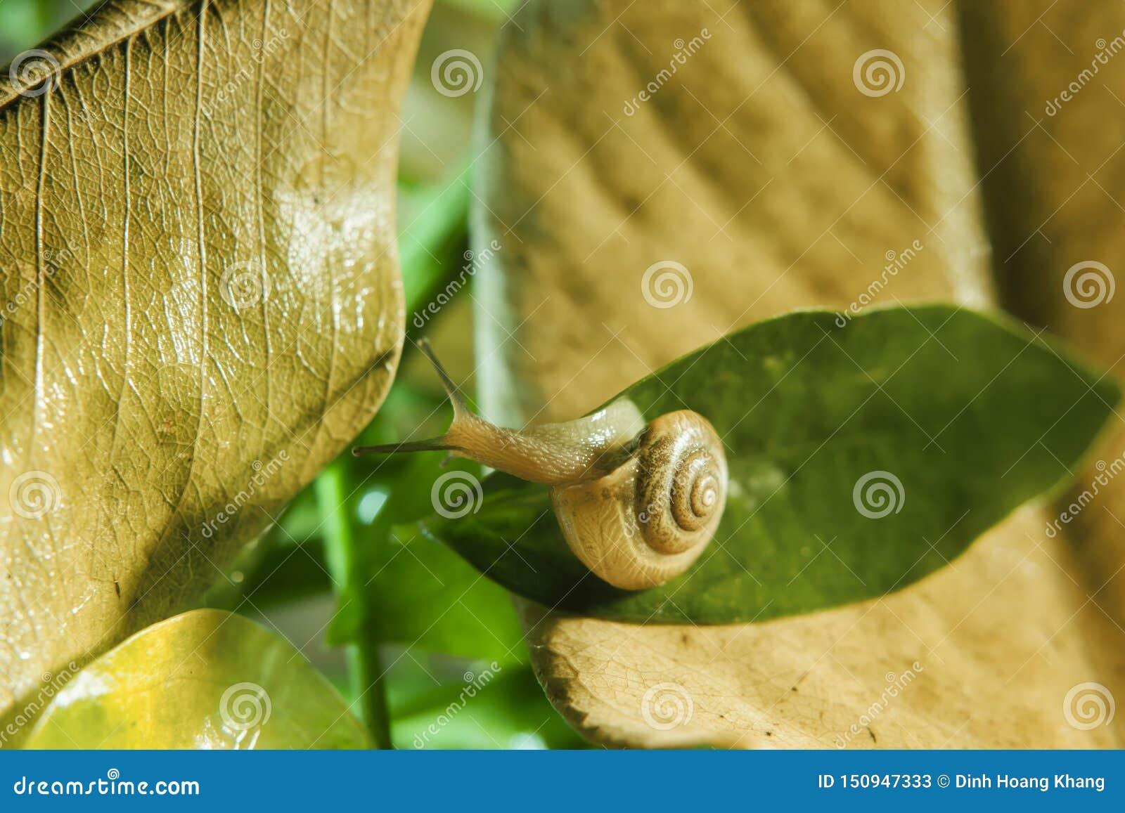 El caracol se está arrastrando en la hoja