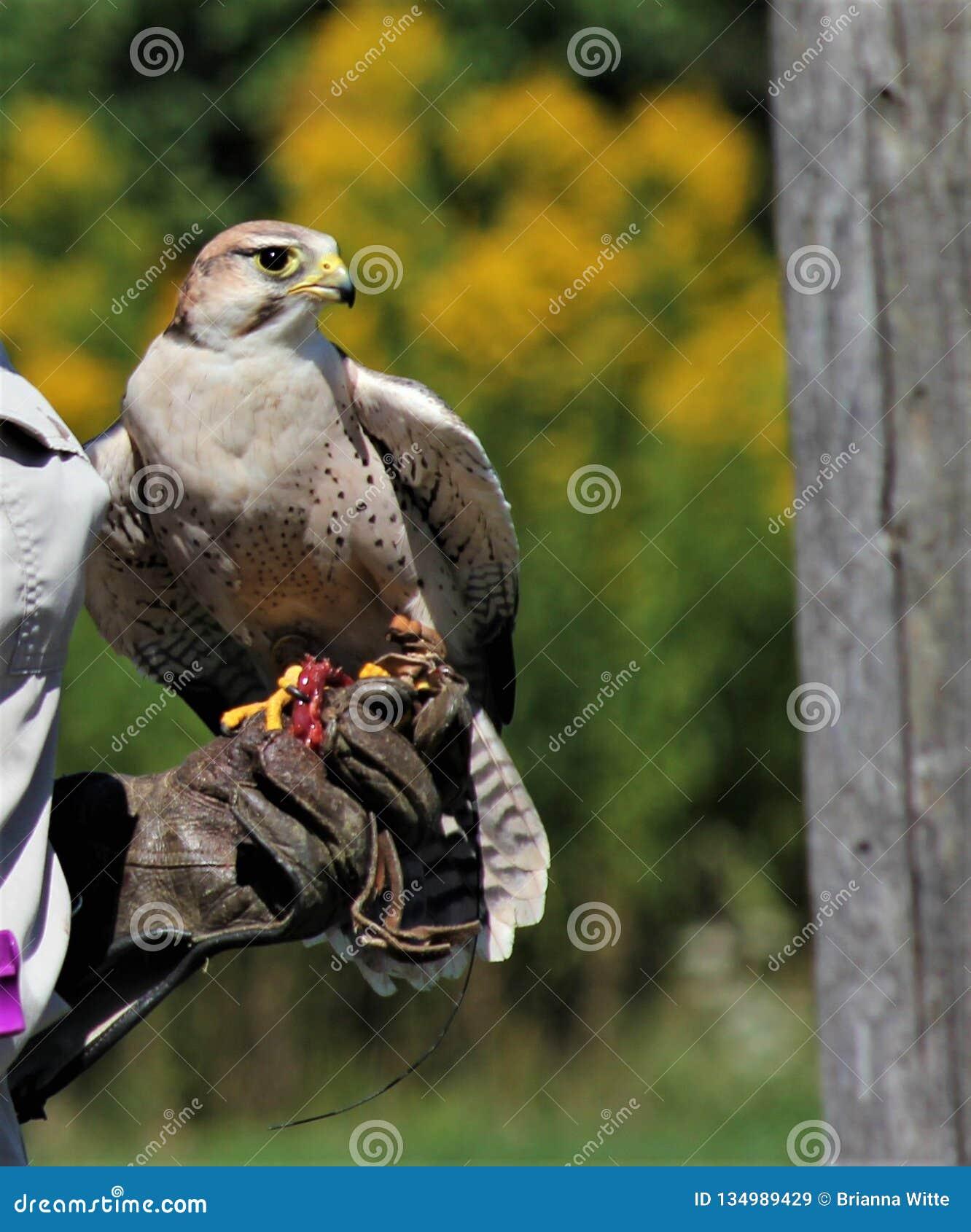 El cazador aviar