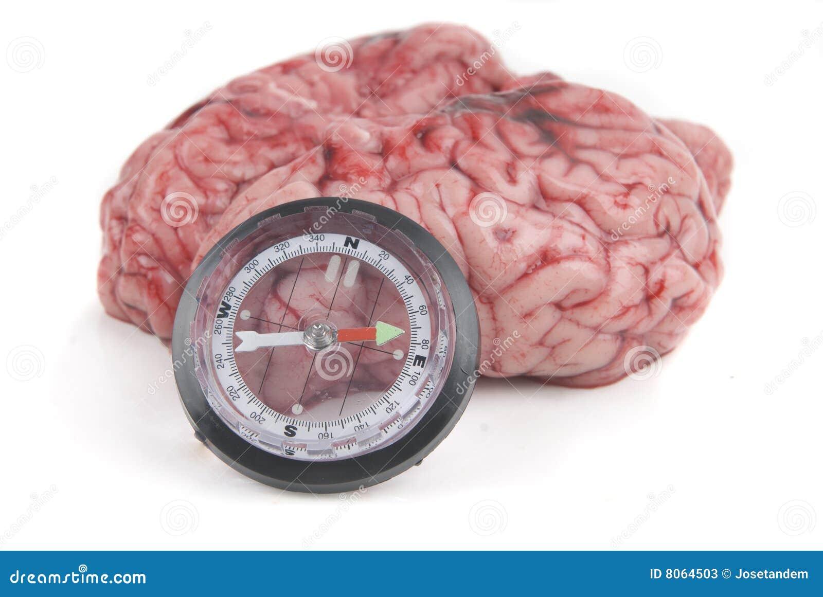 El cerebro de Alzheimer o de Parkinson ha perdido el desori del norte
