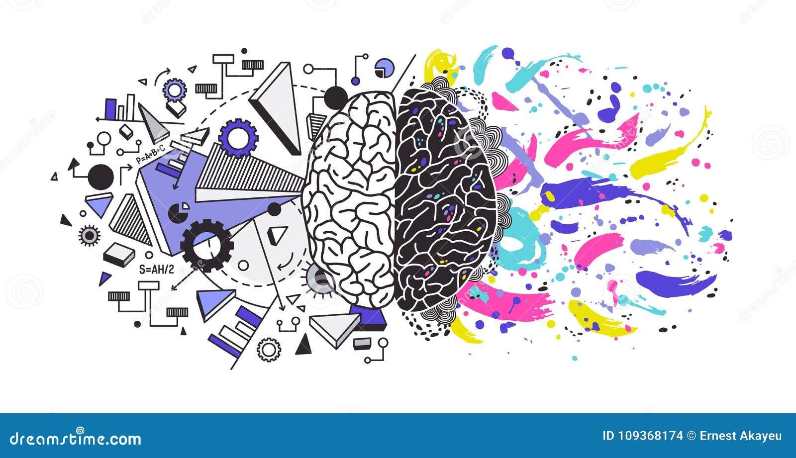 El cerebro humano dividió en los hemisferios cerebrales correctos e izquierdos responsables de diversas funciones - creatividad o
