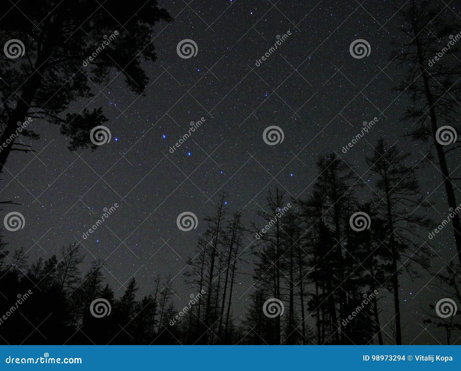 El cielo nocturno protagoniza la atmósfera del bosque de la constelación del cazo grande