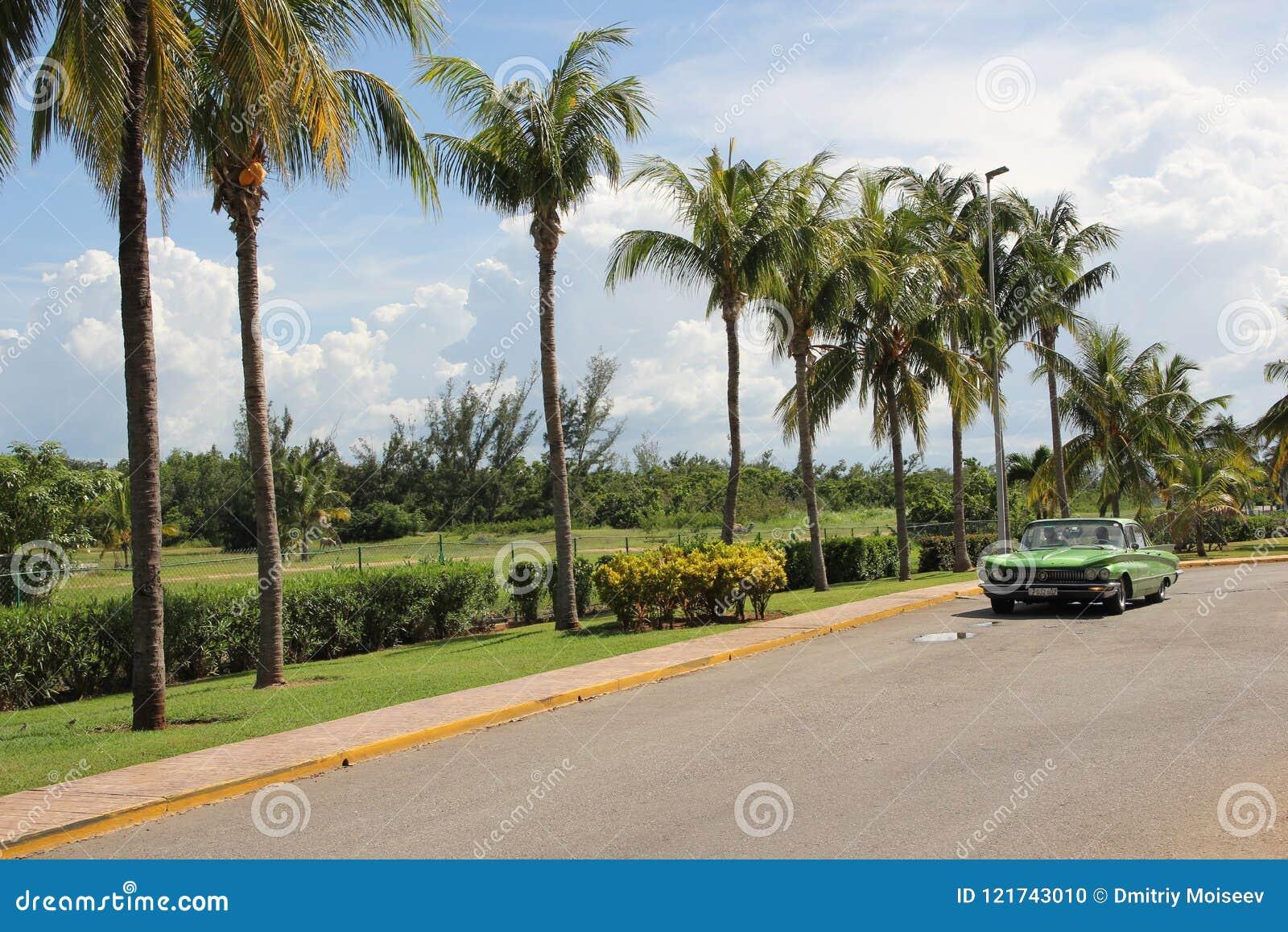 El coche americano del vintage verde monta a lo largo de una fila de palmeras altas