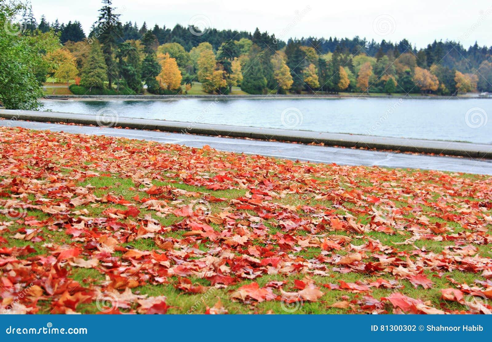 La Se El Color Hojas Vancouver En Caída Abriga De Carbón Otoño 7xEPqxRw