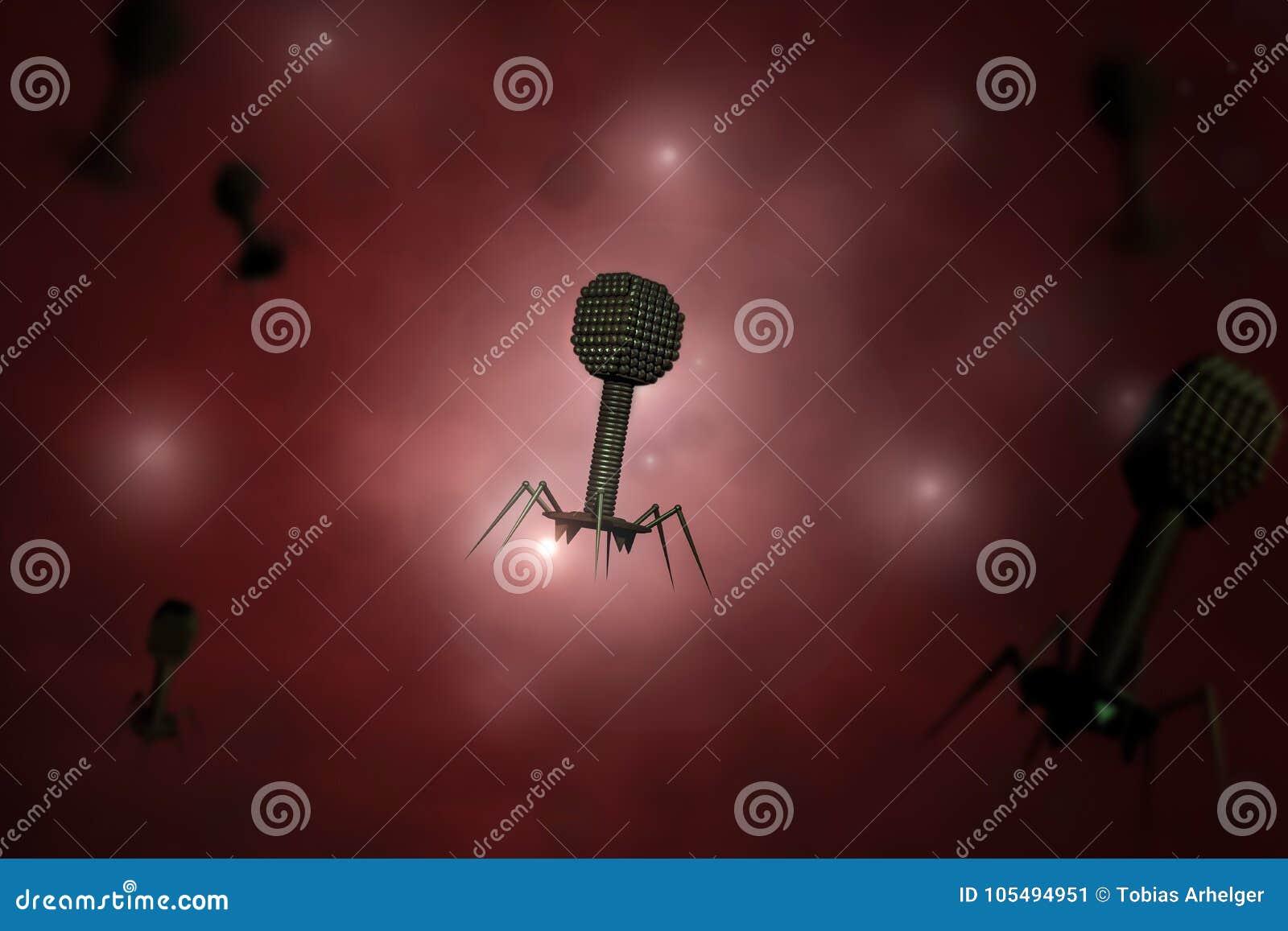 El componer de los virus del bacteriófago
