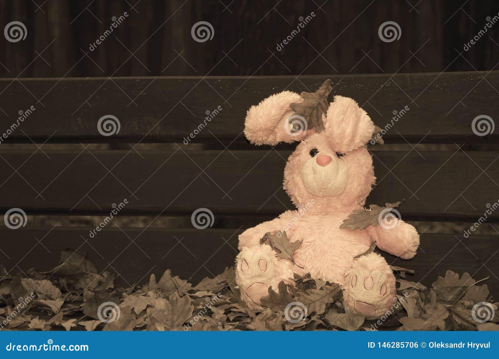 El conejo de conejito abandonado olvidado solo del juguete del peluche se sent? en un banco de madera cubierto con las hojas de o