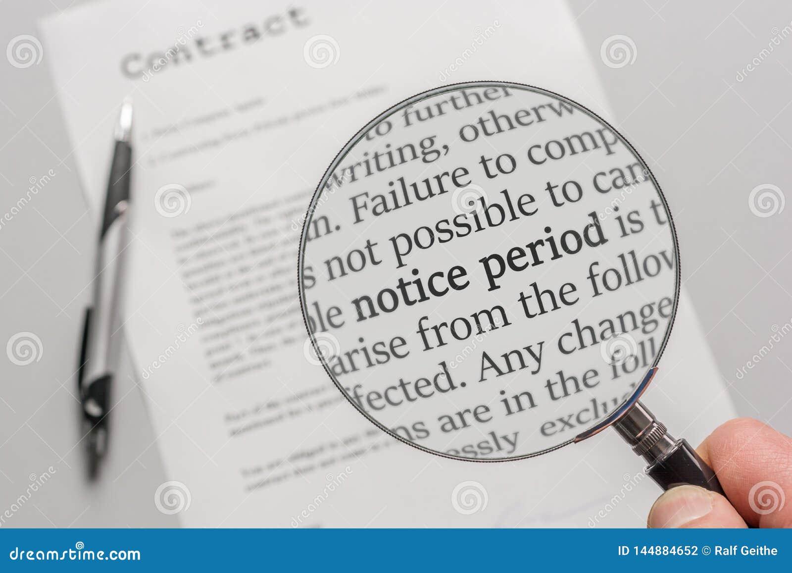El contrato se examina de cerca con una lupa con el foco el períodos del aviso