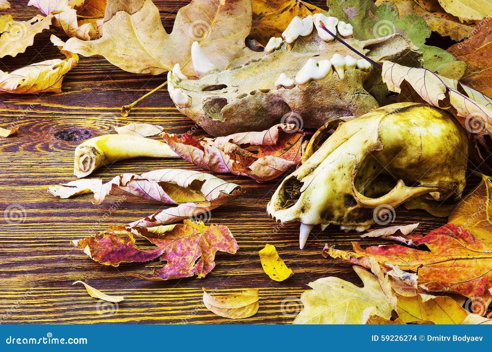 Download El Cráneo Animal Viejo En Una Pila De Descomposición Se Va Foto de archivo - Imagen de archaeology, animales: 59226274