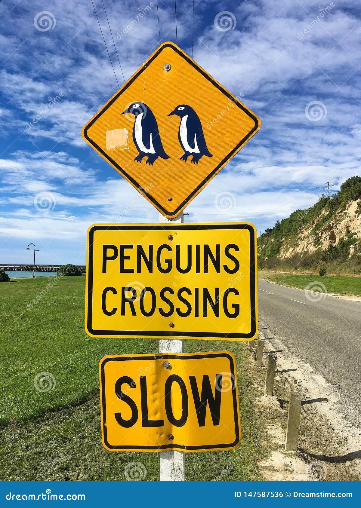 El cruzar de los ping?inos C?maras de la velocidad en funcionamiento