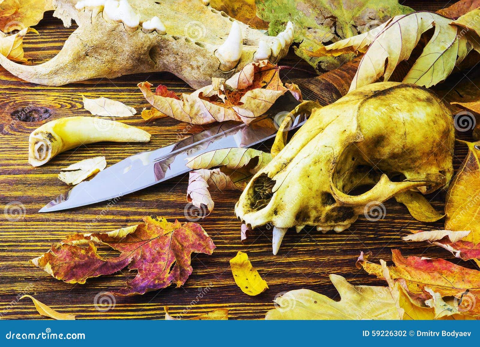 El cuchillo rodeado por los huesos animales en la descomposición se va
