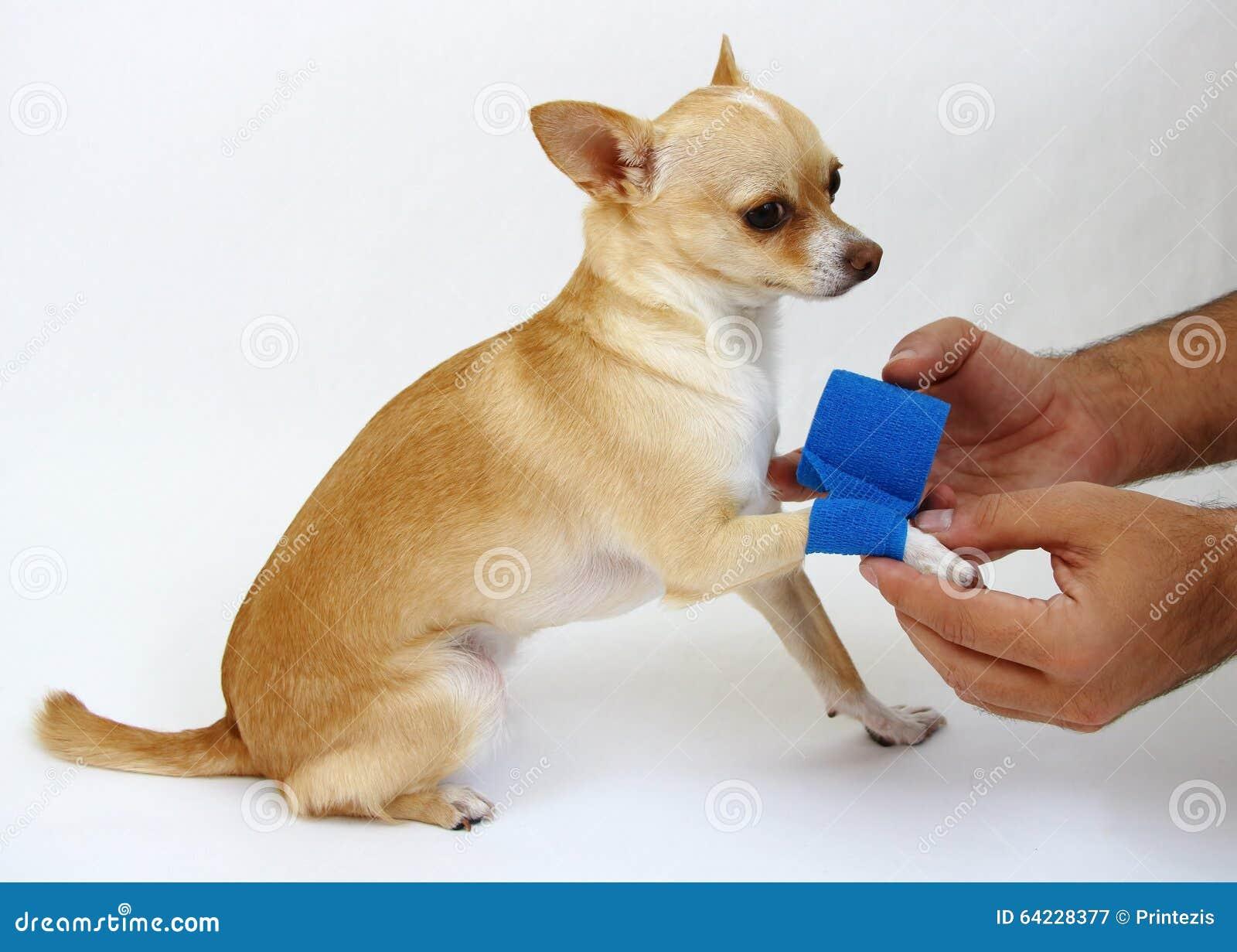 El cuidar para el perro con la pierna del daño