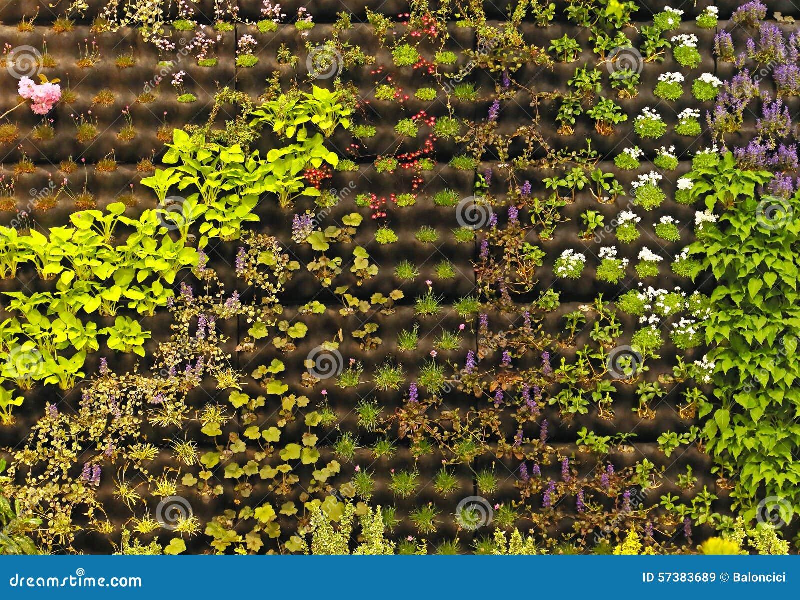 El cultivar un huerto vertical imagen de archivo imagen for Imagenes del huerto vertical