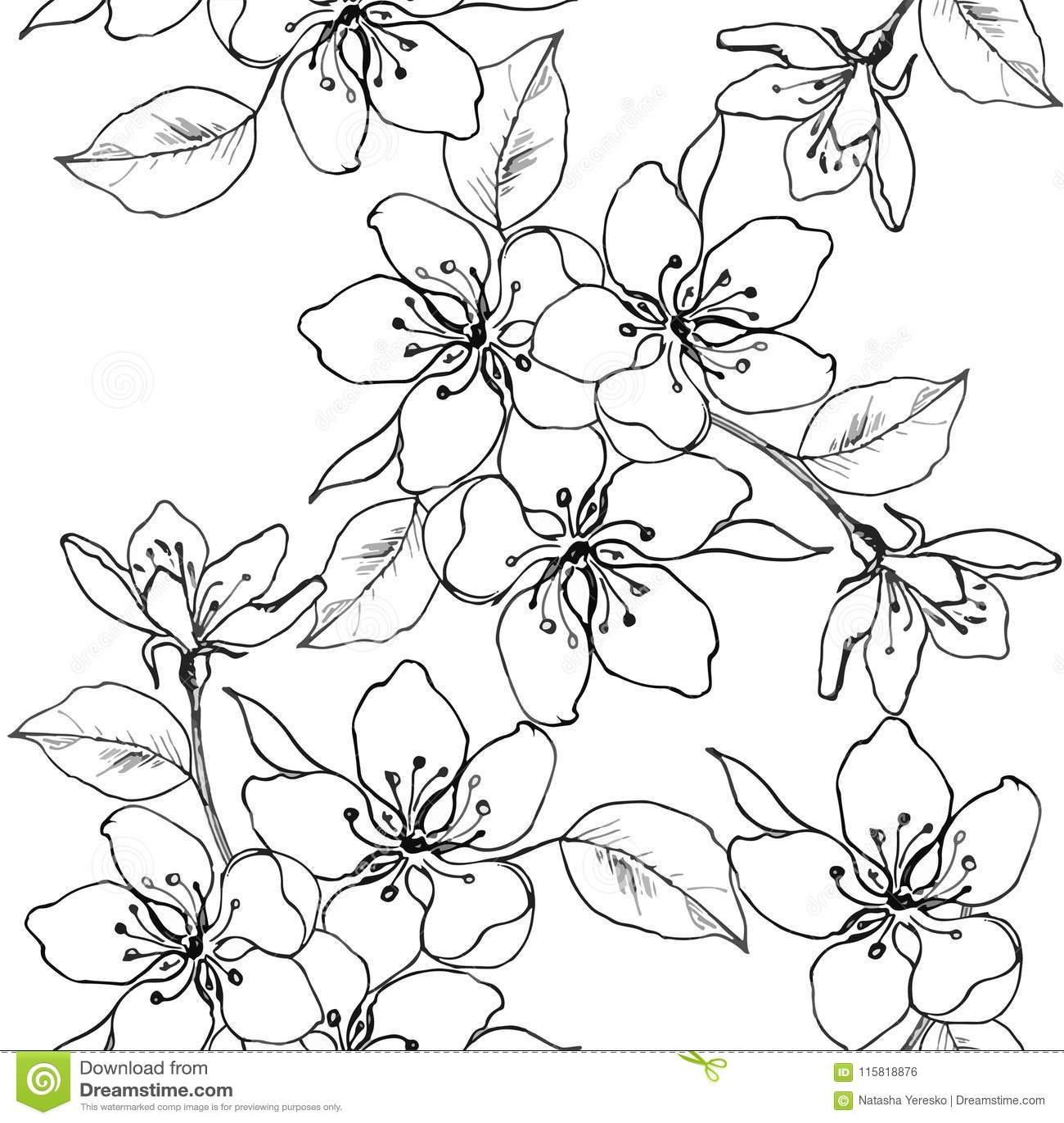 El Dibujo Da Una Rama De La Flor De Cerezo Pera Manzana Modelo