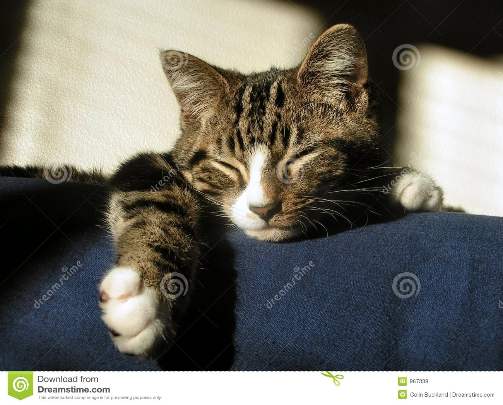 El dormir del gato