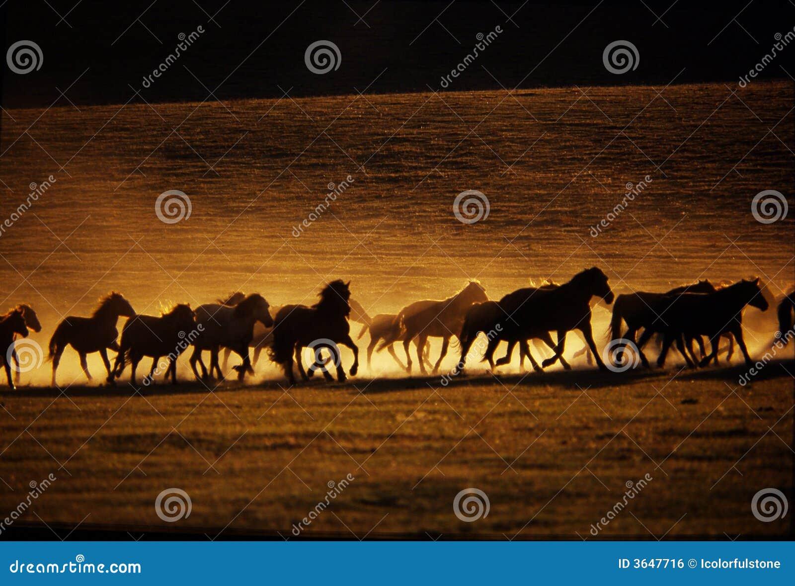 El ejecutarse de los caballos