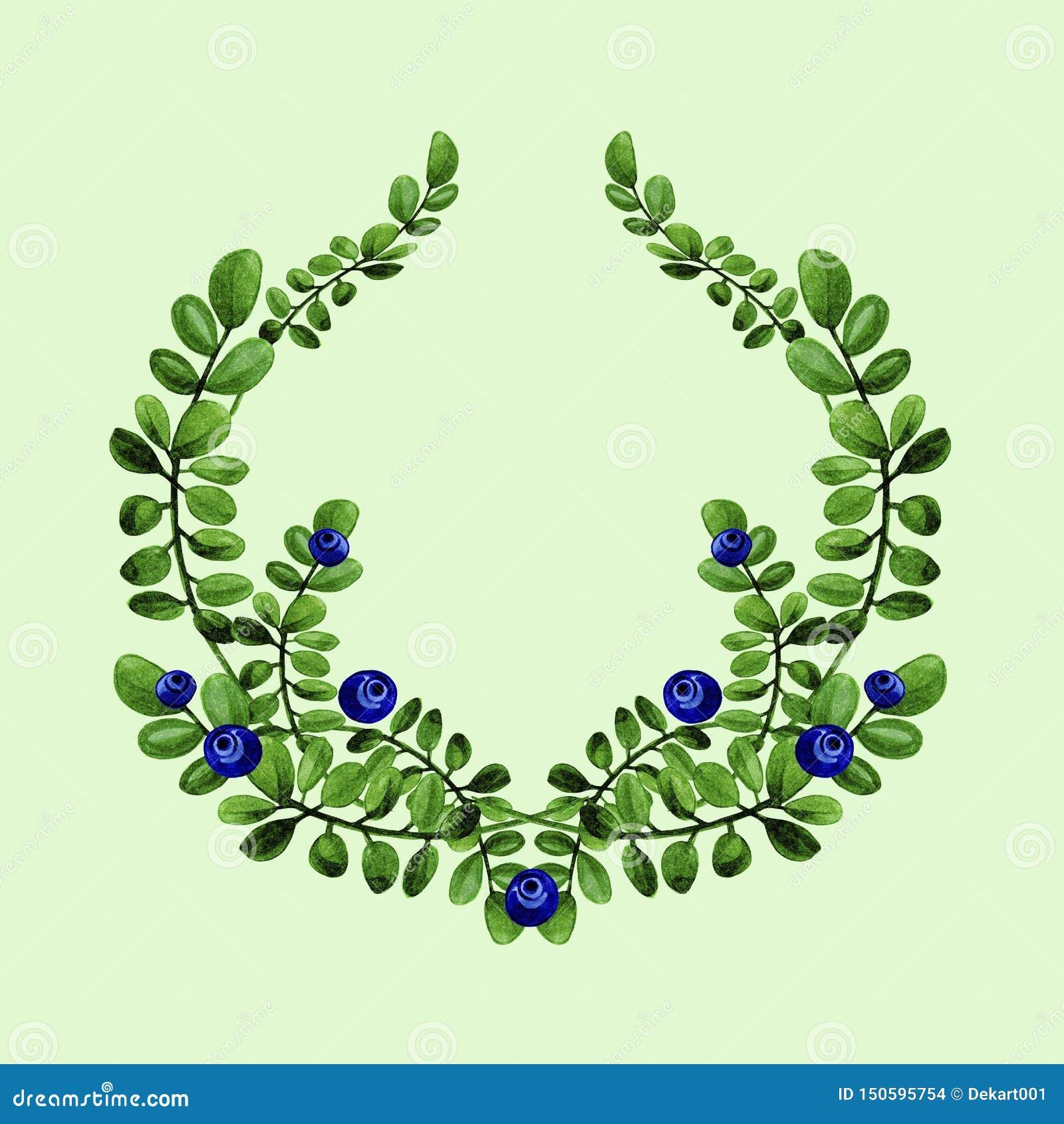 El ejemplo floral de la acuarela de las ramas de los arándanos con las hojas verdes enrruella