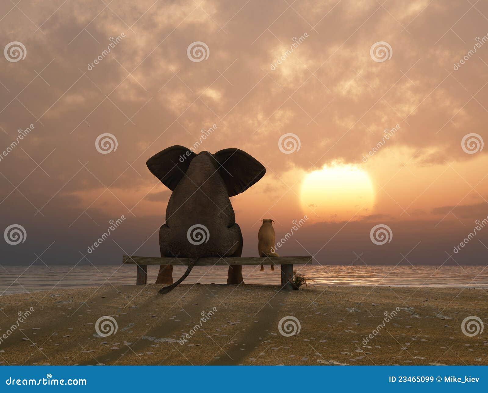 El elefante y el perro se sientan en una playa