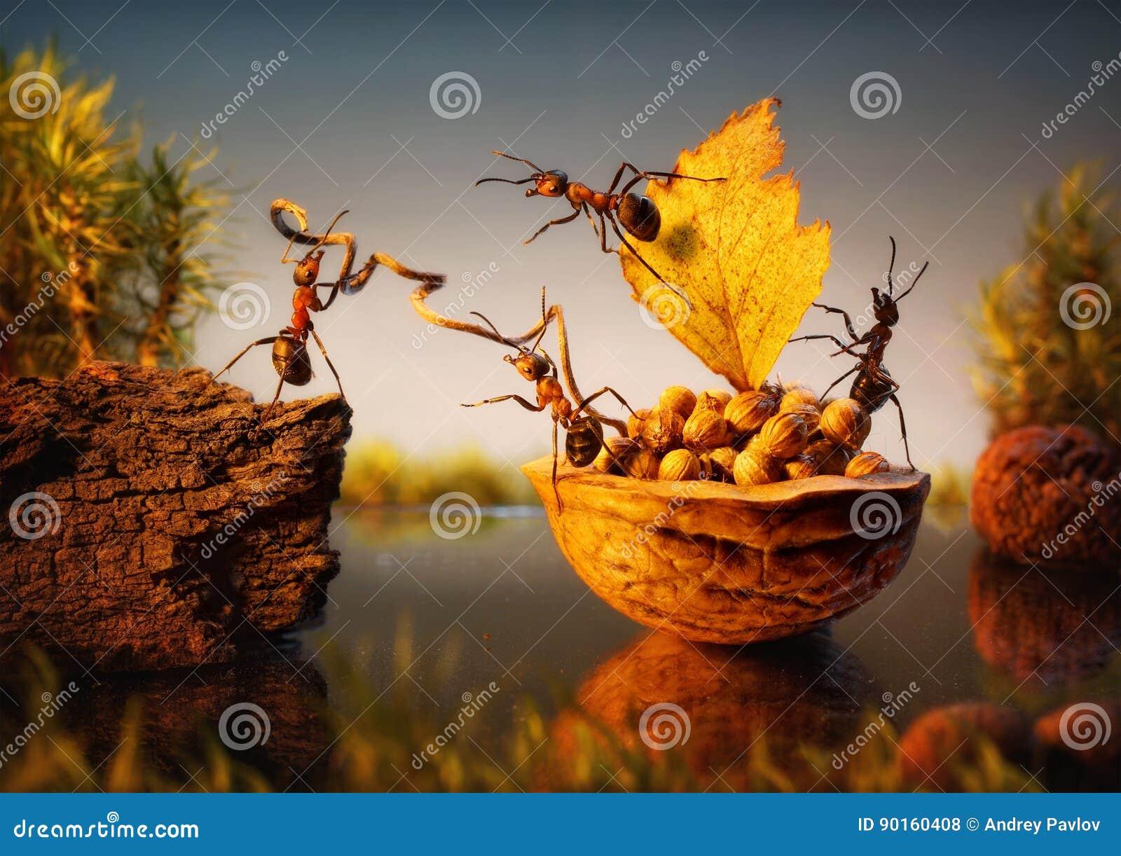 El equipo de hormigas amarra la corteza con las nueces, trabajo en equipo