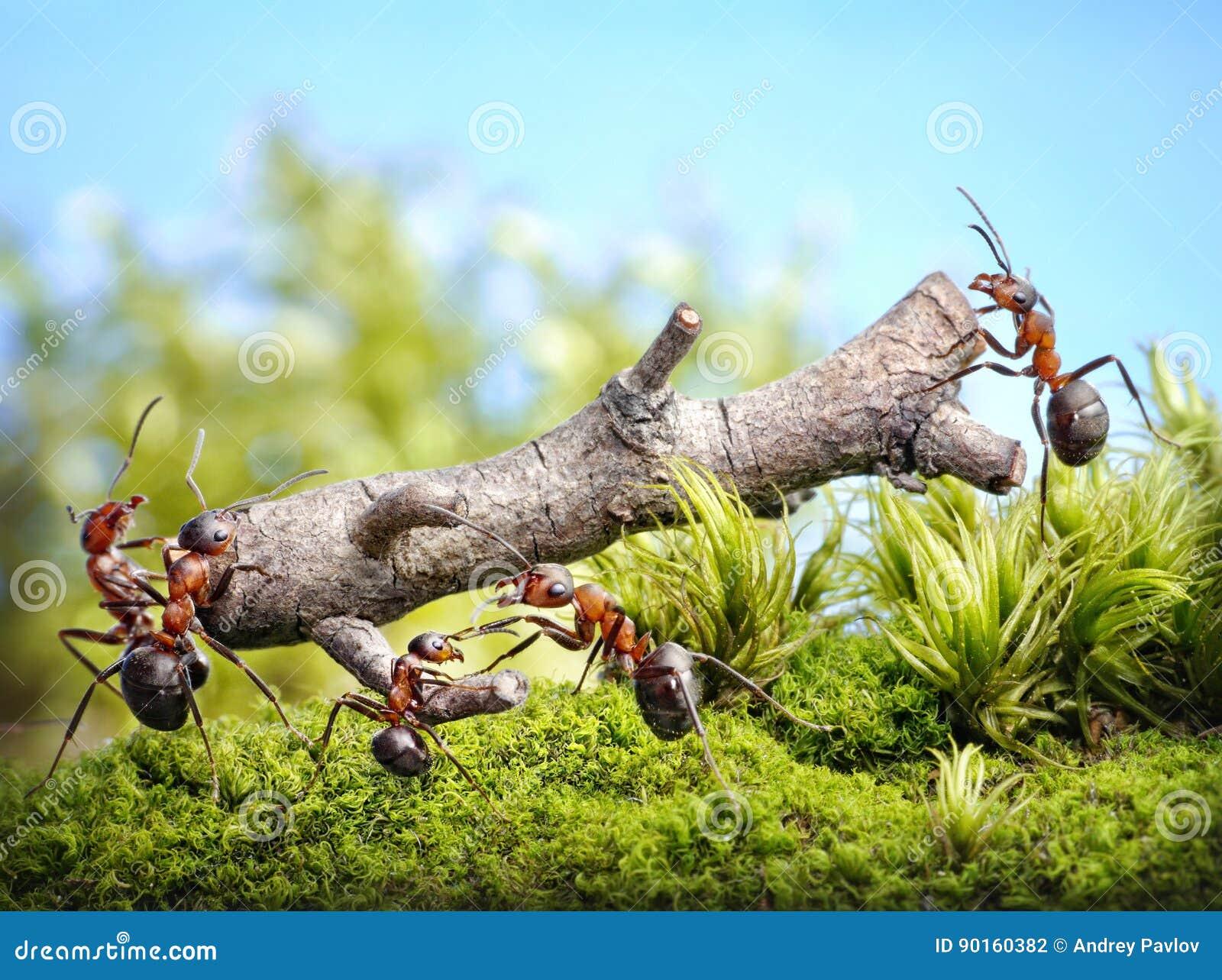 El equipo de hormigas lleva el registro, trabajo en equipo