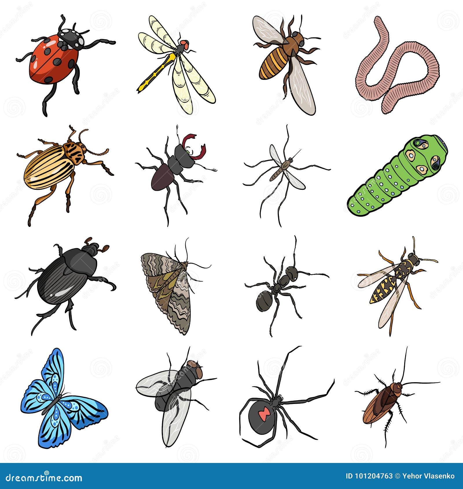 Excepcional Anatomía De Un Insecto De La Píldora Elaboración ...