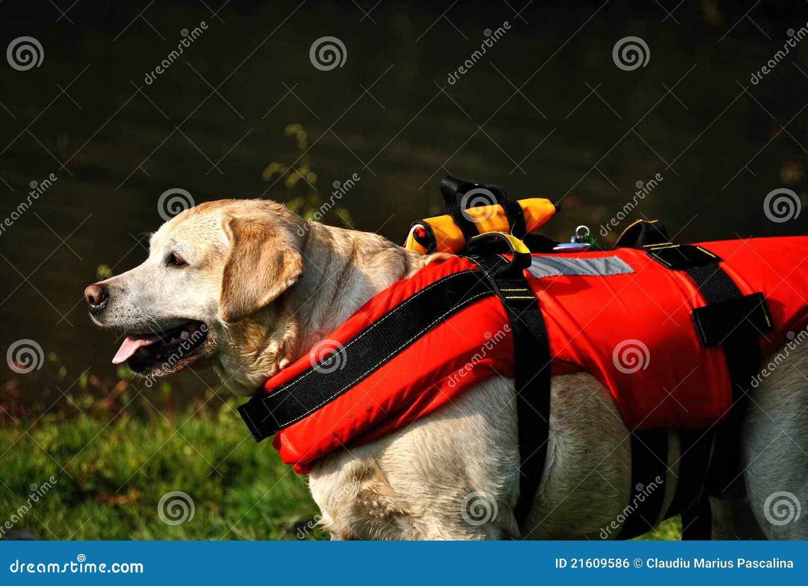 El esperar del perro del rescate