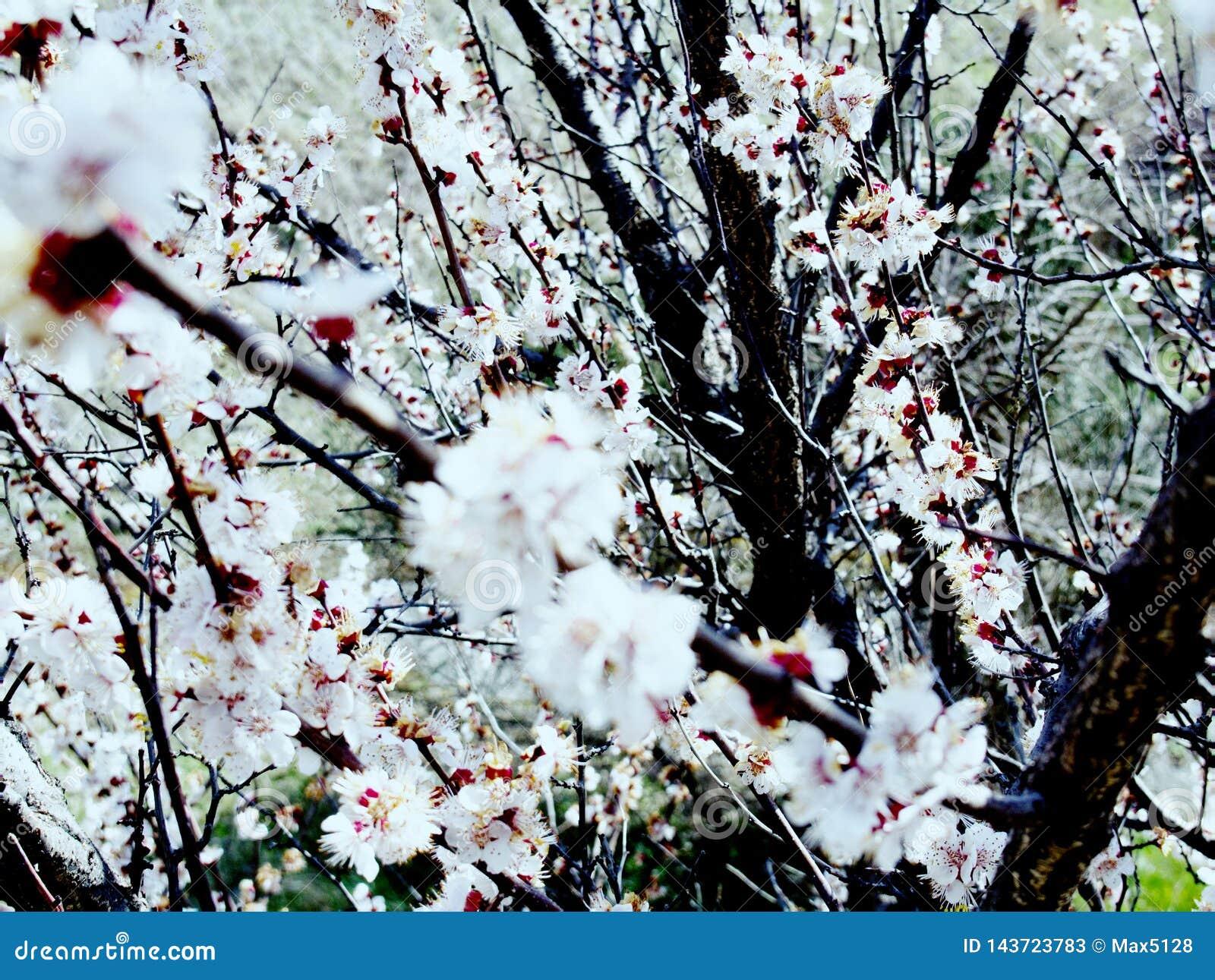 El esplendor y el aroma de jardines florecientes