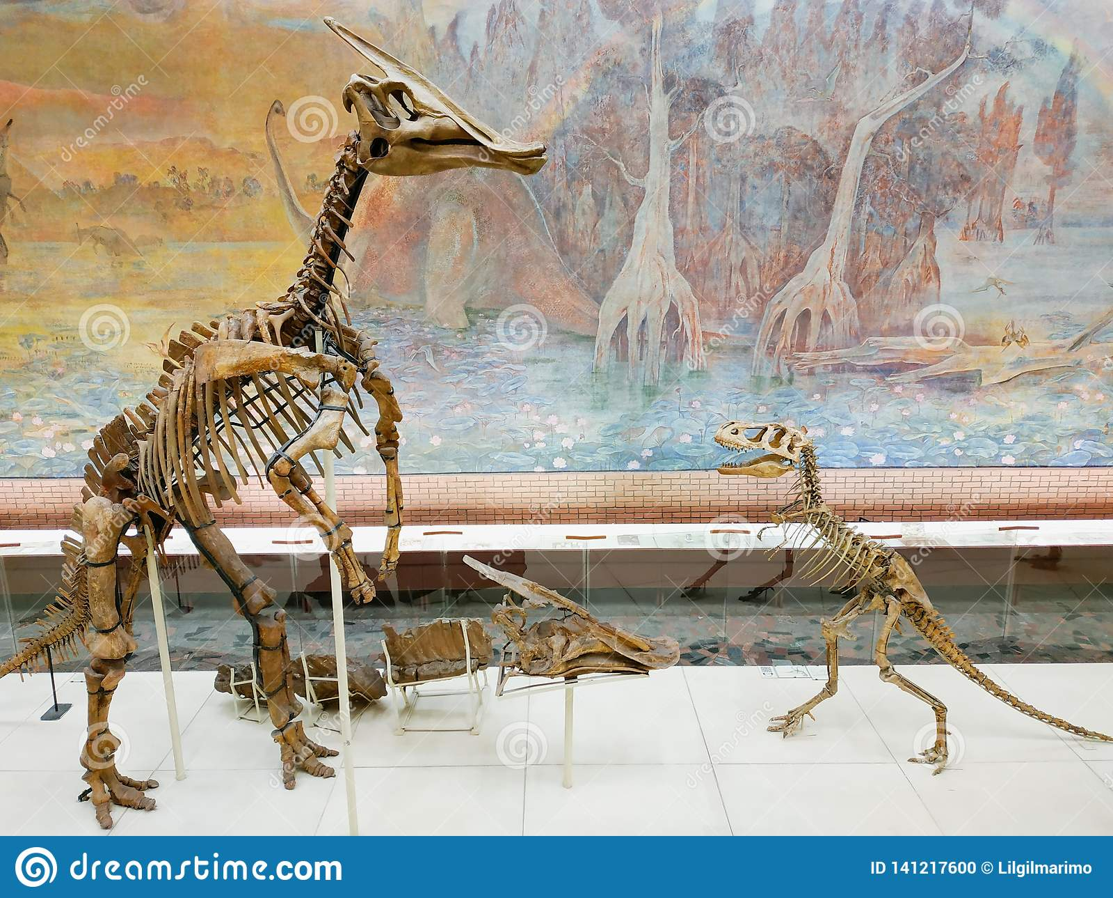 El esqueleto del dinosaurio vertical en museo de la paleontología