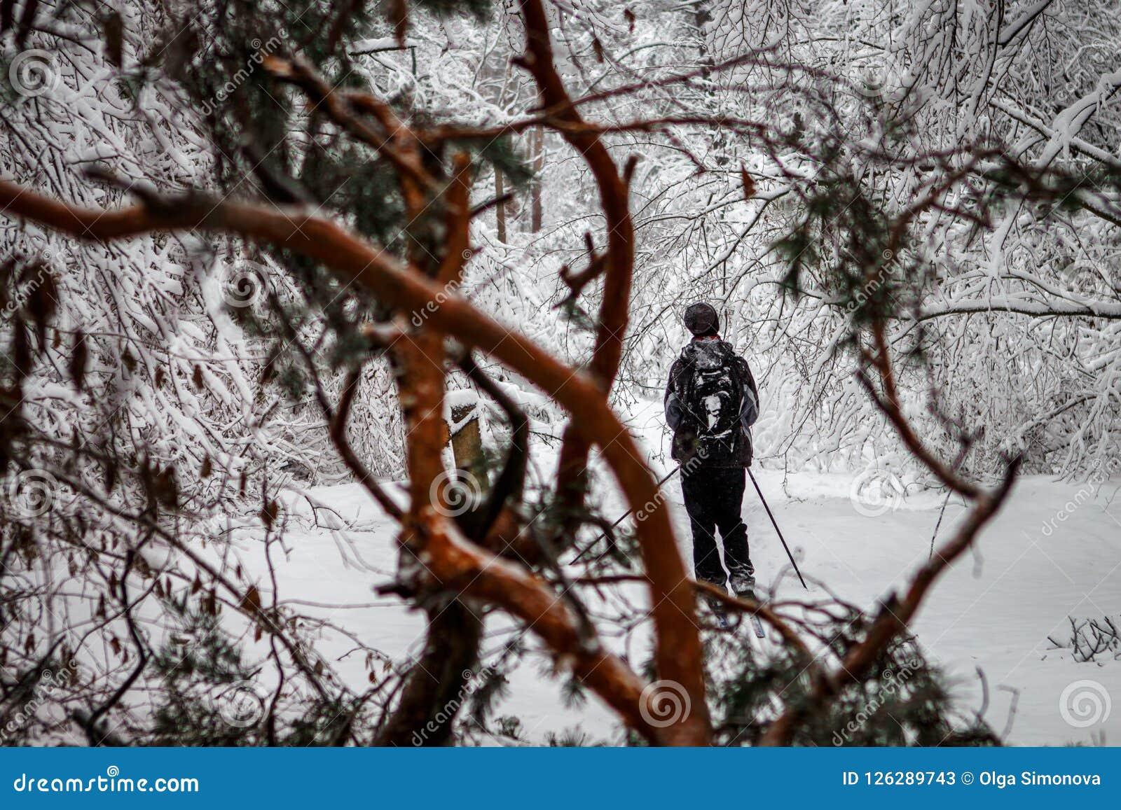 El esquiador en un bosque nevoso después de una nevada se escabulle a través de las ramas caidas de árboles