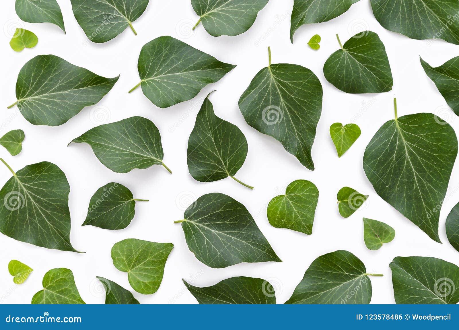 El estampado de flores hecho de verde se va en el fondo blanco Endecha plana, visión superior Textura del modelo de la hoja